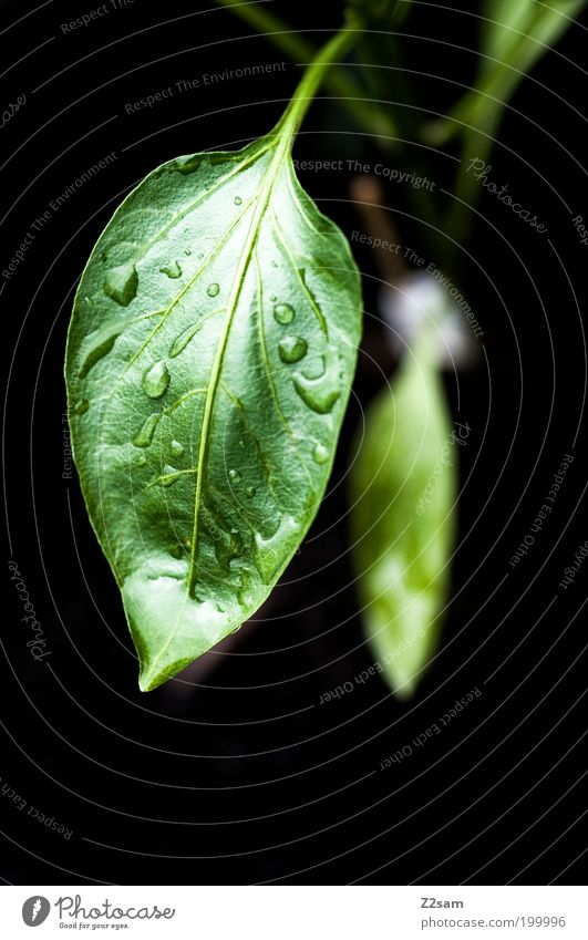 Nature Green Plant Leaf Black Dark Style Garden Rain Landscape Healthy Elegant Environment Drops of water Wet Fresh