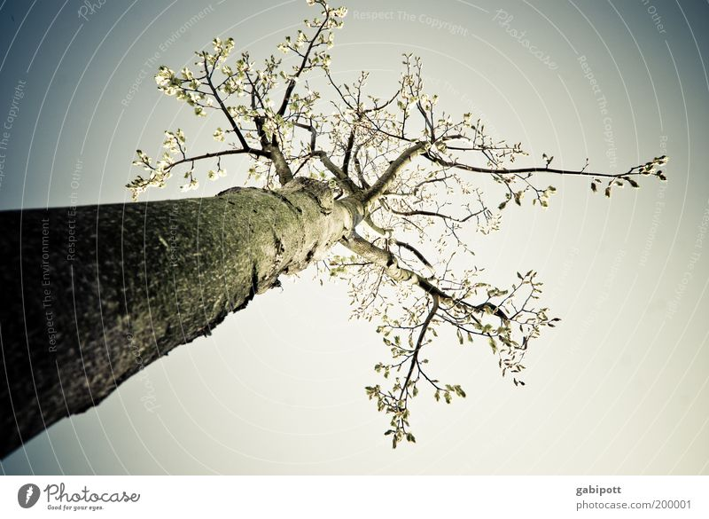 Nature Tree Plant Environment Landscape Spring Air Tall Large Growth Infinity Joie de vivre (Vitality) Fear of the future Climate change Environmental pollution