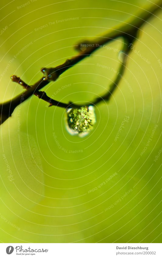 Nature Plant Green Summer White Calm Life Spring Glittering Drops of water Individual Wet Drop Twig Thin Harmonious
