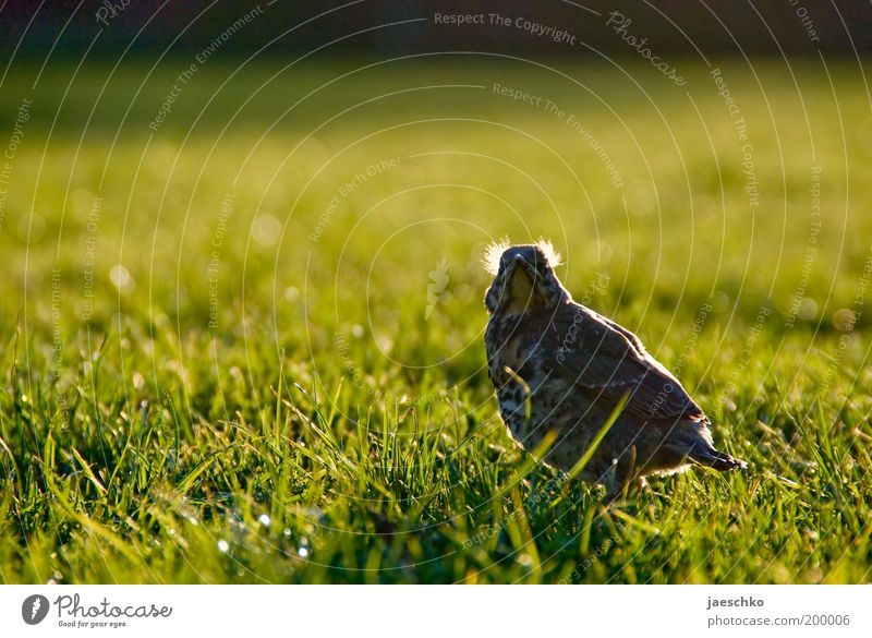 Nature Loneliness Animal Meadow Grass Spring Garden Park Power Bird Small Growth Lawn Threat Feather