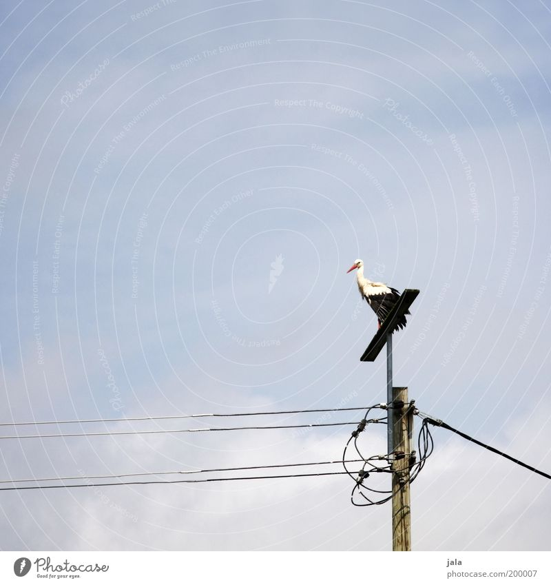 Rattle Rattle Rattle Stork Sky Animal Bird 1 Stand Vantage point Electricity pylon High voltage power line Mythical creature Childhood wish Colour photo