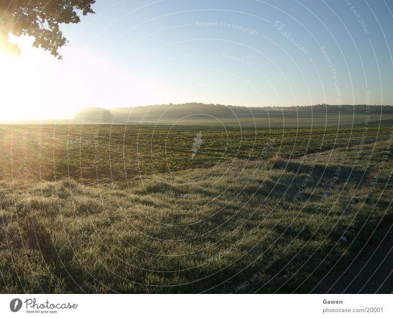 morning fog Fog Sunrise Light Field Morning Far-off places Rope Nature