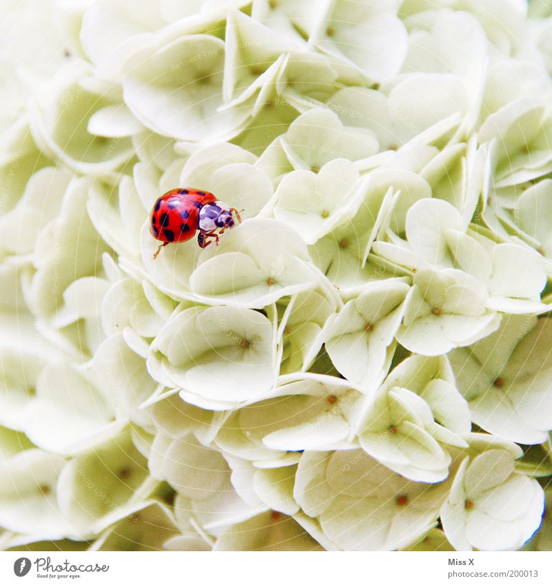 flower bed Nature Plant Spring Summer Flower Blossom Garden Park Animal Beetle 1 Blossoming Fragrance Discover Crawl Kitsch Small Happy Climbing Guelder rose