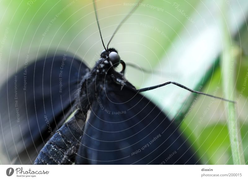 Nature Green Plant Animal Black Life Movement Small Wild animal Natural Wing Insect Butterfly Virgin forest Easy Exotic