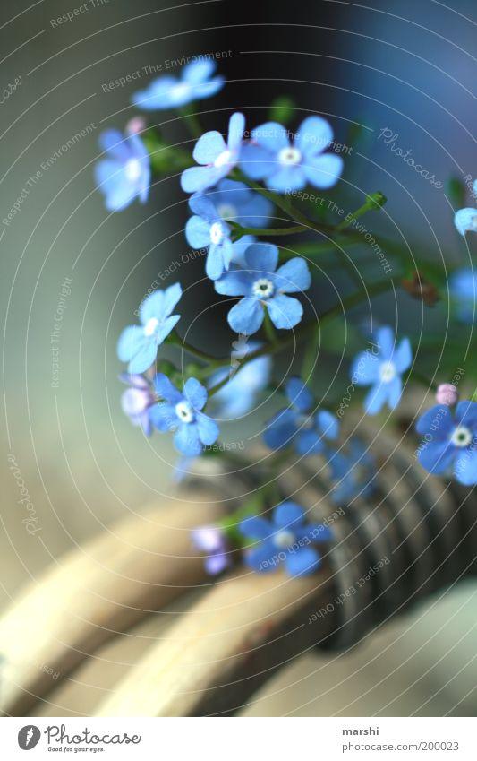 Nature Blue Plant Flower Summer Blossom Spring Moody Friendship Delicate Basket Forget-me-not