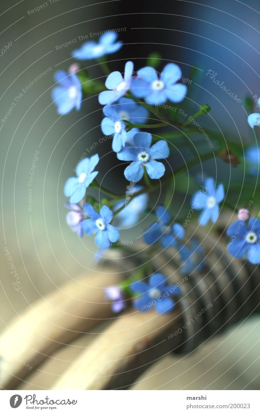 Spring Leaves His Blue Ribbon... Nature Plant Summer Flower Forget-me-not Blur Blossom Basket Delicate Moody Colour photo Exterior shot Friendship