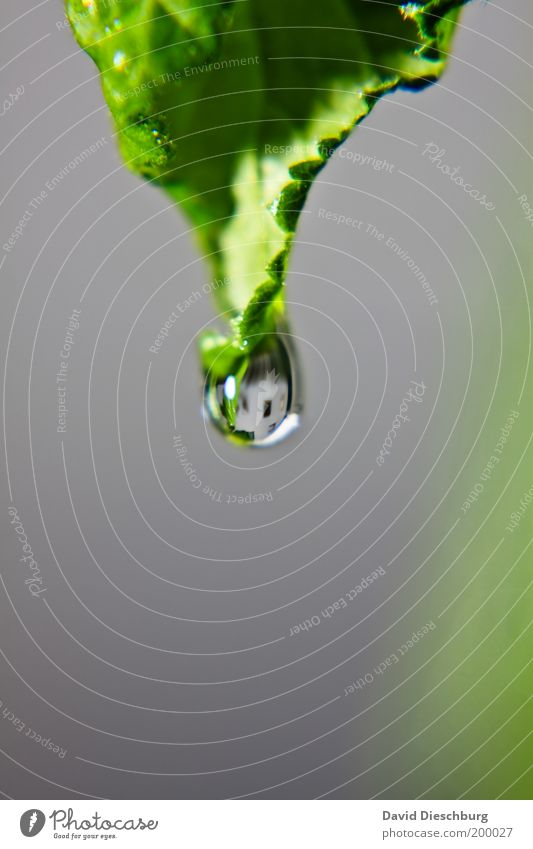 Nature Plant Green Summer Leaf Calm Life Spring Gray Glittering Drops of water Individual Wet Round Drop Dew