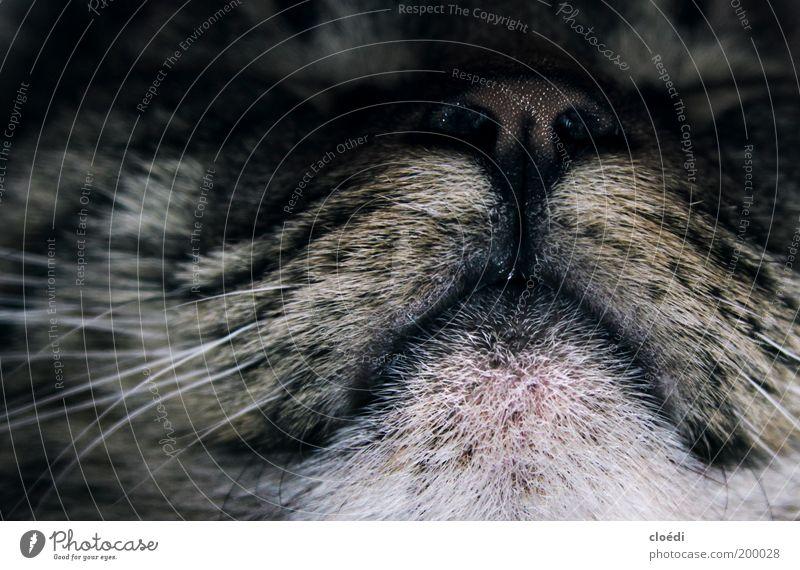 White Black Animal Gray Dream Cat Contentment Nose Sleep Cool (slang) Soft Animal face Lie Natural Pelt Warm-heartedness