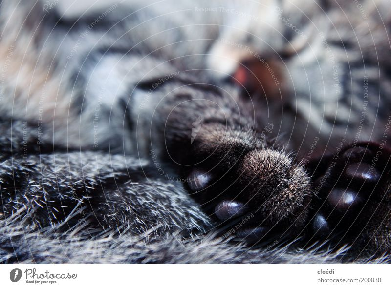 White Black Animal Gray Dream Cat Warmth Contentment Brown Glittering Sleep Soft Animal face Lie Pelt Warm-heartedness