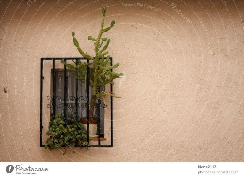 freedom-seeking Window Grating Window board Windowsill Plant Flowerpot Cactus South Southern Spain Southern France Italy Facade Freedom Garden Safety
