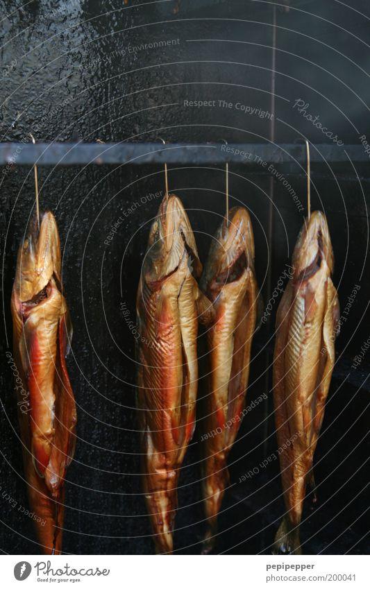 Animal Nutrition Food Brown Gold Fish Smoke Delicious Hang Juicy Checkmark 4 Fish market Smoked