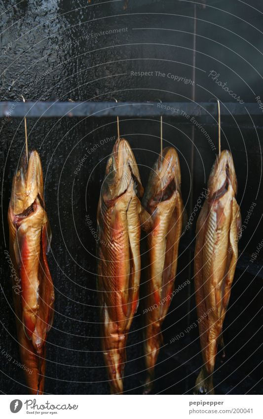 gutted and tasty Food Fish Nutrition Dead animal 4 Animal Delicious Juicy Brown Gold Fish market Colour photo Exterior shot Close-up Detail Deserted Light
