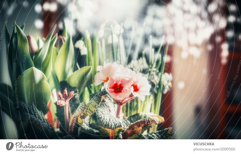 Pretty flowers at the Bokeh background Style Design Summer Flat (apartment) Interior design Decoration Nature Plant Spring Flower Tulip Leaf Blossom Bouquet