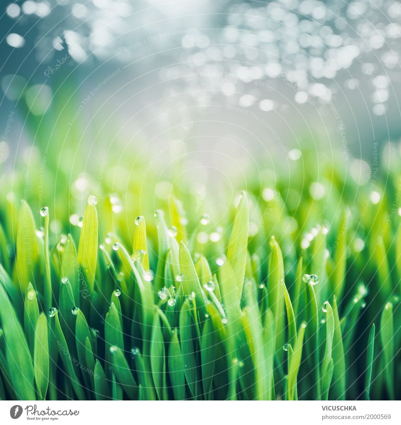 Fresh green grass with dew drops Lifestyle Design Summer Garden Environment Nature Landscape Plant Drops of water Sky only Spring Beautiful weather Grass Park