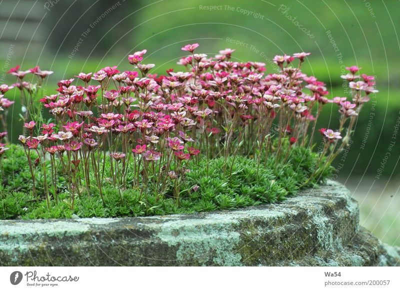 Nature Flower Green Plant Calm Life Blossom Spring Gray Stone Park Contentment Moody Pink Fresh Esthetic