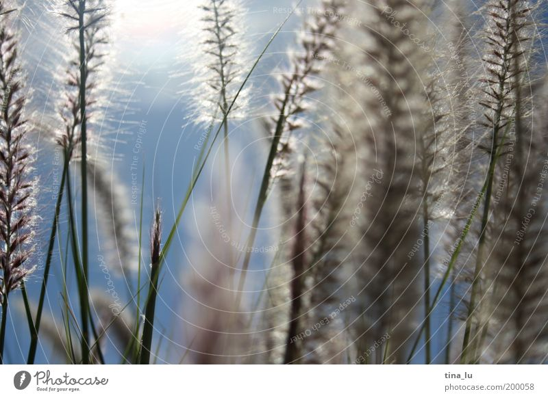 Nature Beautiful Sun Summer Grass Spring Growth Bushes Blade of grass Beautiful weather Seed Natural growth Seed plant