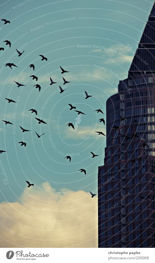 the swarm Freedom Sightseeing City trip Frankfurt High-rise Tower Building Architecture Facade Bird Flock Creepy Equal Attachment Flock of birds Surrealism