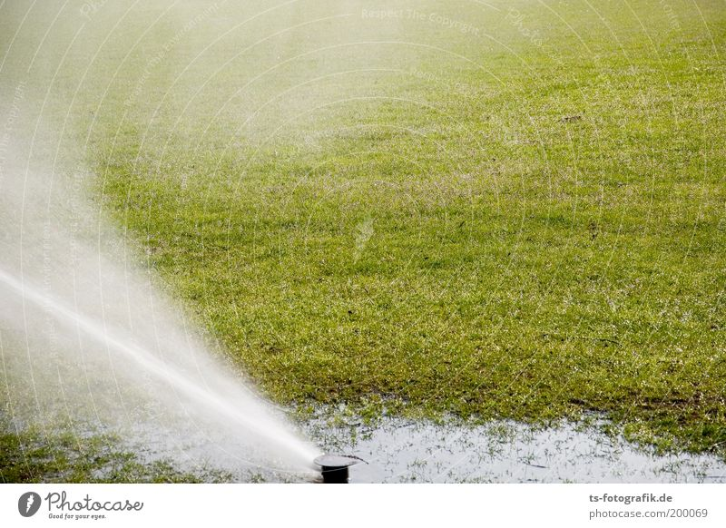 wet grass fun Sporting Complex Football pitch World Cup South Africa Gardening Gardener Water Drops of water Summer Climate change Weather Beautiful weather