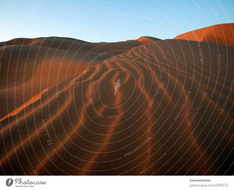Sahara Vacation & Travel Tourism Far-off places Freedom Nature Sand Desert Loneliness Libya wind ripple Dune Colour photo Exterior shot Deserted Evening Shadow