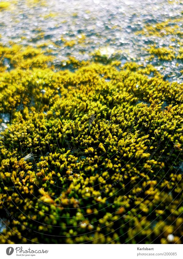 Nature Beautiful Green Plant Calm Yellow Life Gray Stone Environment Growth Natural Moss Surface Foliage plant Abstract