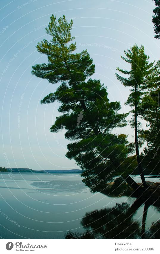 Relax Environment Nature Landscape Water Cloudless sky Spring Tree Lakeside Power Protection Romance Canada Ontario Vacation photo Colour photo Exterior shot