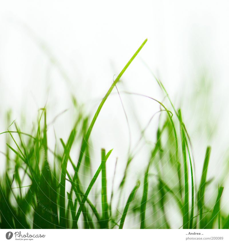 grass whispering Football pitch Environment Nature Plant Grass Foliage plant Garden Park Meadow Field Going Green Healthy Beautiful Grass green Grass meadow