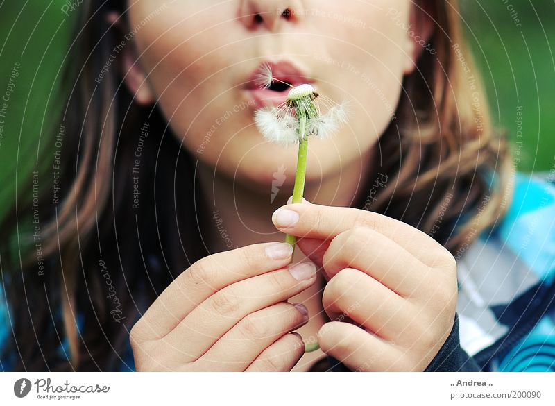 dandelion Summer Feminine Woman Adults Face 1 Human being Plant Blossom Blossoming Dandelion Blow Lips Hand Fingers nikonic d80 Weightlessness Easy Airy Breathe