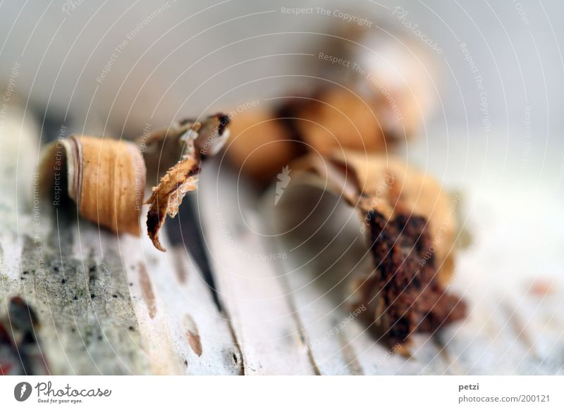 ripping open Wood Firm Brown Gray White Nature Colour photo Exterior shot Close-up Detail Structures and shapes Deserted Copy Space top Sunlight Blur Tree bark