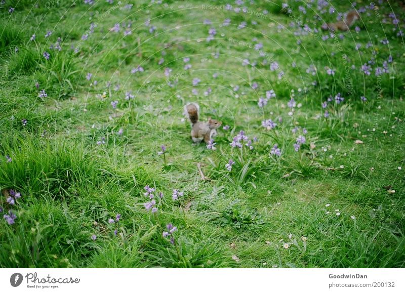 Nature Flower Animal Meadow Grass Spring Wait Small Observe Curiosity Blossoming Discover Cute Copy Space Squirrel Baby animal