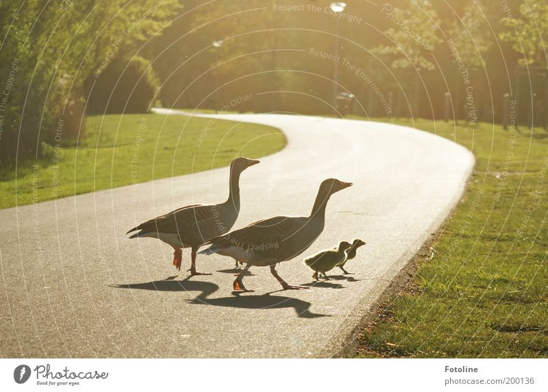 Nature Plant Animal Grass Spring Park Warmth Landscape Bright Bird Weather Walking Environment Group of animals Soft Climate
