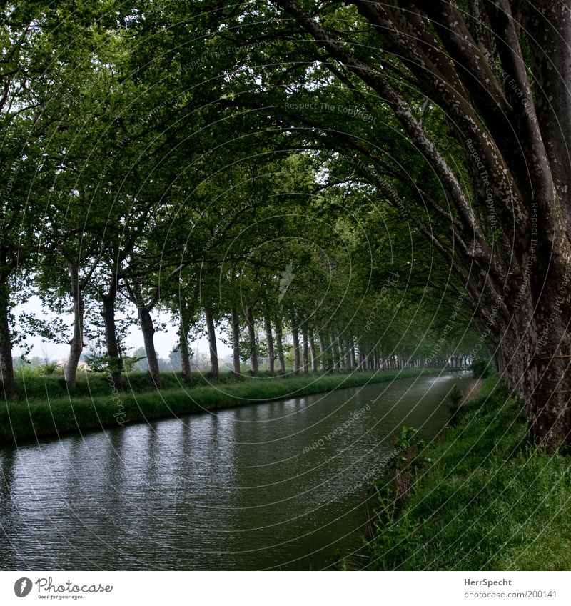 Nature Water Tree Green Plant Summer Calm Spring Landscape Row River bank River Channel Low-key Light (Natural Phenomenon) Inland navigation