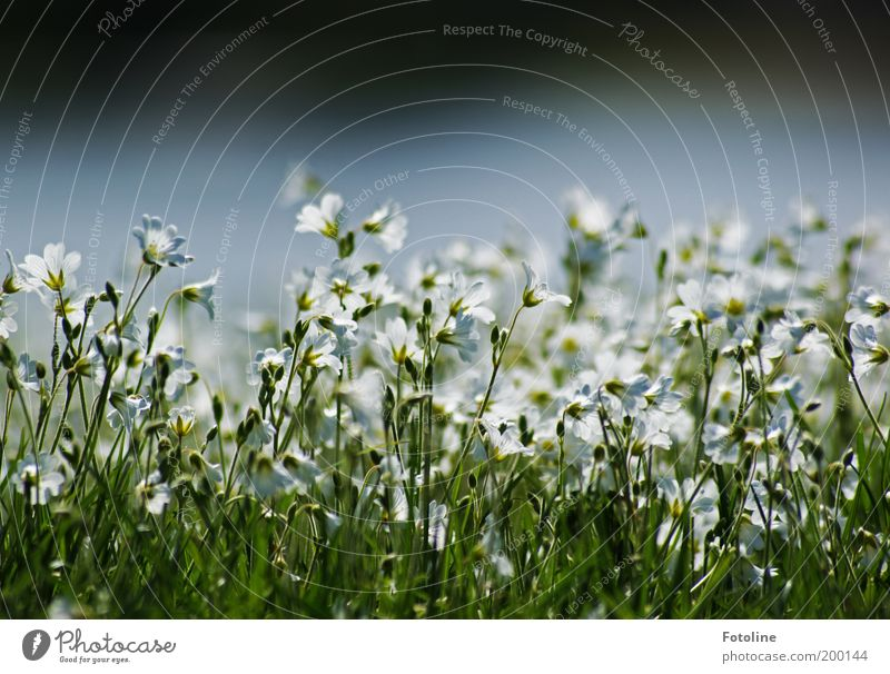 Wild Flower Festival Environment Nature Landscape Plant Spring Climate Weather Beautiful weather Warmth Grass Wild plant Garden Park Meadow Bright Green White