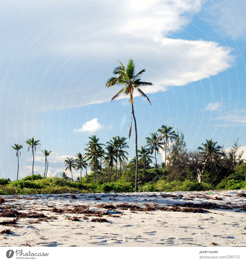 Diani Beach Sky Nature Vacation & Travel Green White Relaxation Clouds Warmth Coast Natural Sand Idyll Authentic Beautiful weather Africa