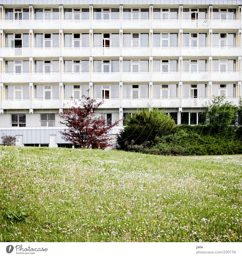 local recreation area Plant Grass Bushes Foliage plant Garden Park Meadow House (Residential Structure) Building Architecture Facade Balcony Spring fever