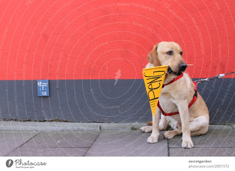 Dog Red Animal Wall (building) Wall (barrier) Gray Brown Contentment Characters Signs and labeling Sit Wait Signage Concrete Break