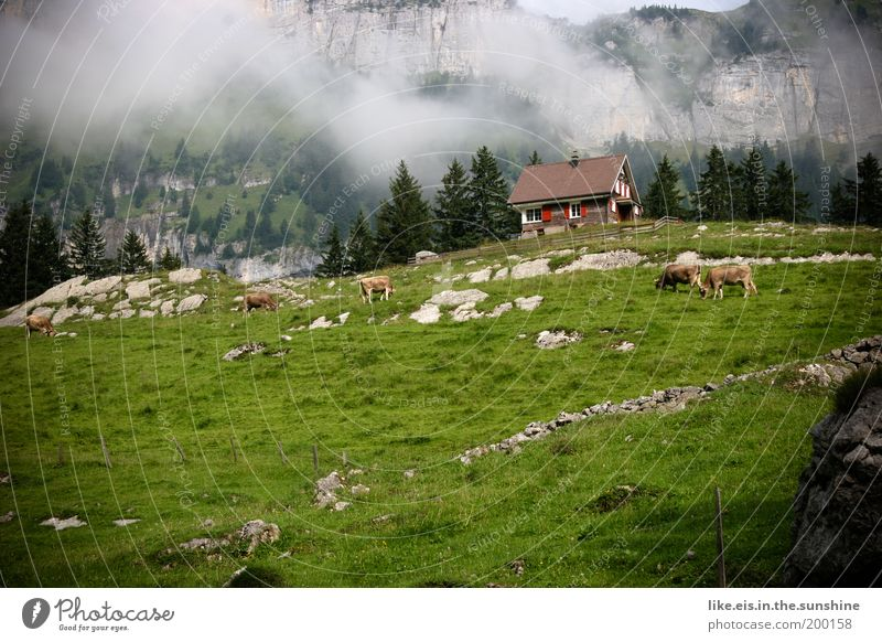 Postcard from Appenzell: 1,10€ Summer vacation Mountain Alpine pasture Chalet vacation Hut Cow Esthetic Fantastic Beautiful Green Happy Happiness Contentment