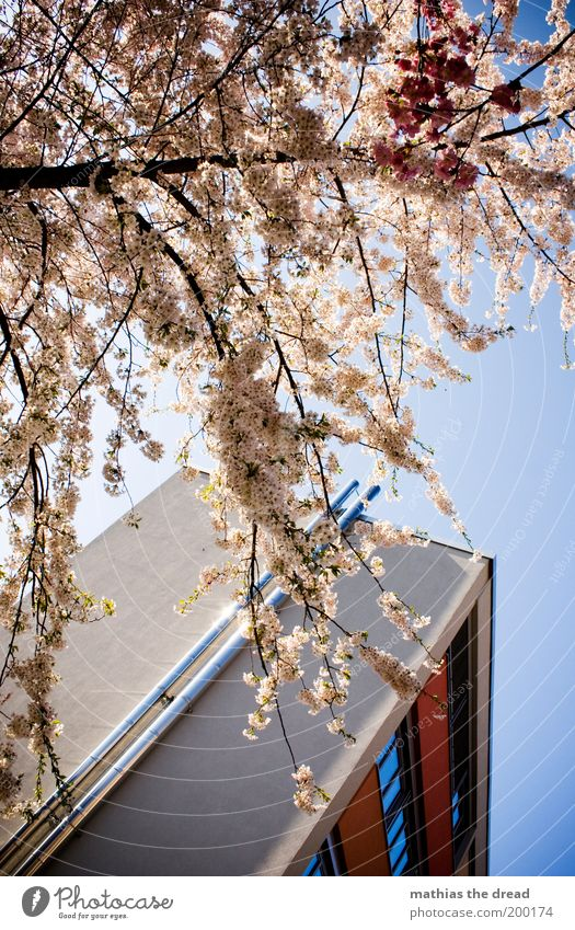 Sky Nature White Beautiful Tree Plant House (Residential Structure) Window Environment Landscape Architecture Blossom Building Spring Park Growth