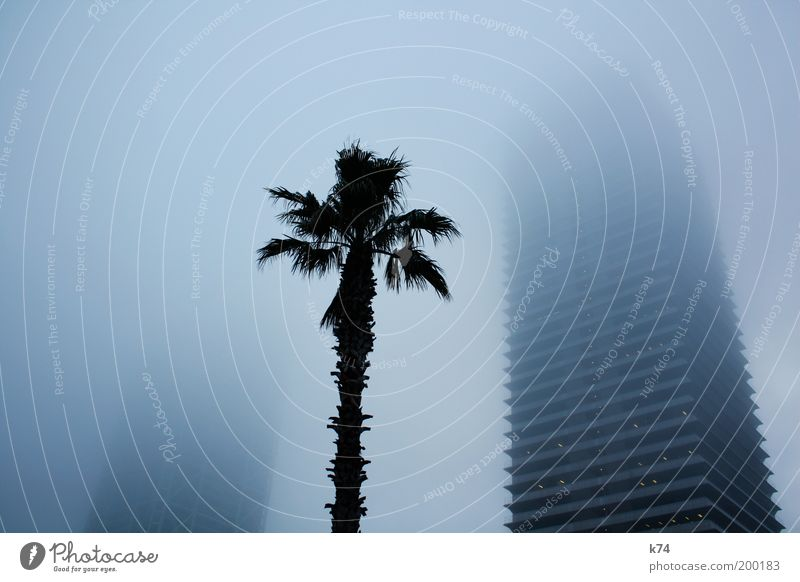 towers, fog and palm tree Colour photo Subdued colour Exterior shot Fog Town Skyline High-rise Manmade structures Building Architecture Threat Mysterious Large