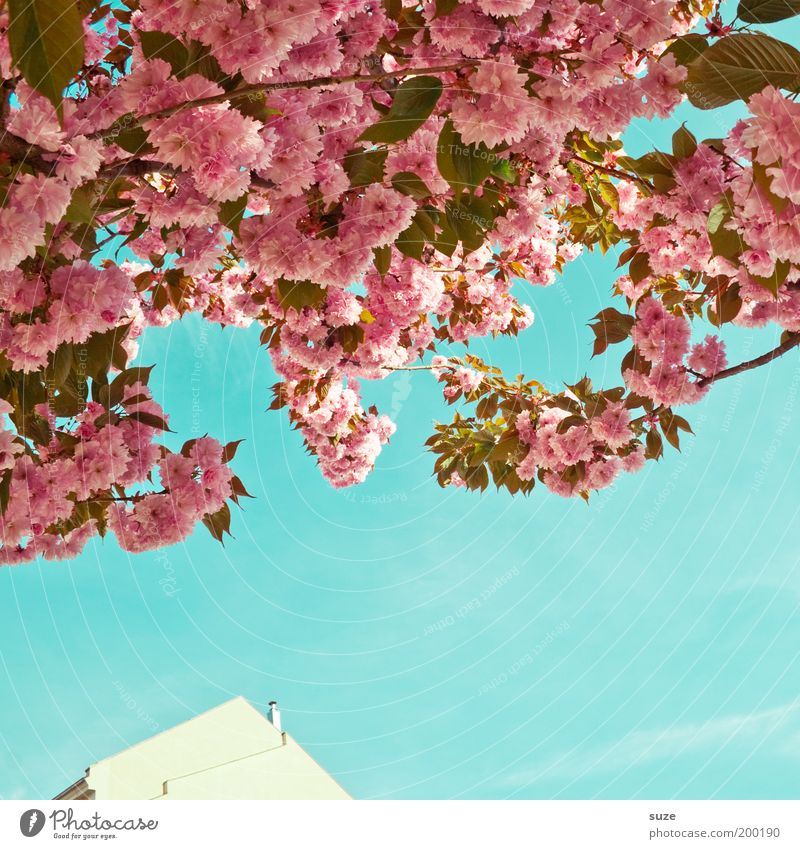 Nature Beautiful Sky Tree Plant Summer House (Residential Structure) Blossom Spring Park Pink Environment Facade Esthetic Growth Bushes