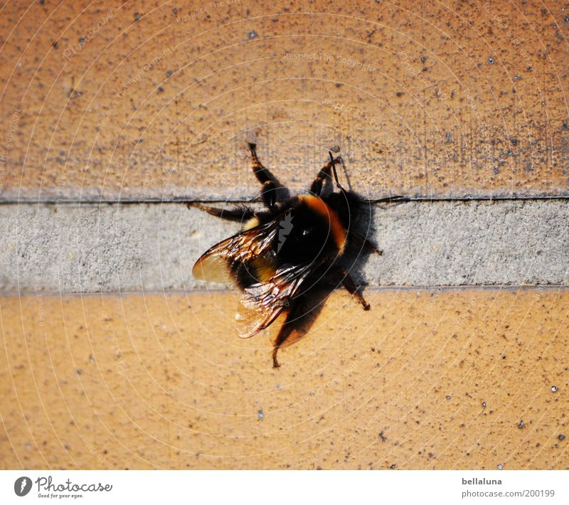 Nature Beautiful Black Animal House (Residential Structure) Relaxation Wall (building) Environment Wing Break Insect Beautiful weather Fat Seam Bumble bee