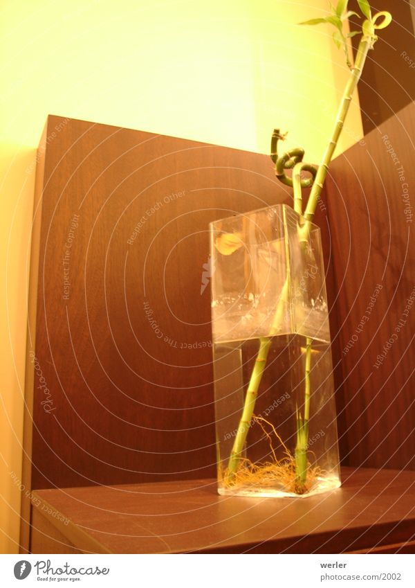 asia_bamboo Physics Brown Yellow Vase Café Plant Living or residing Bamboo stick Warmth Perspective Glass modern living