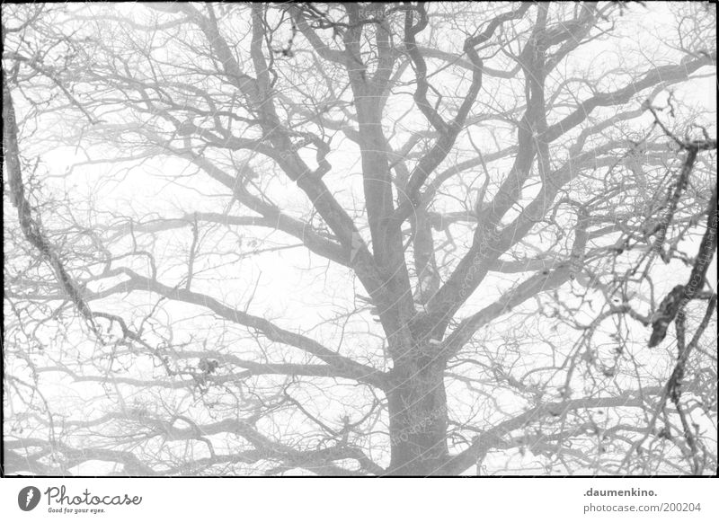Nature Tree Life Line Power Fog Might Branch Uniqueness Strong Respect Twig Tree bark Branchage Self-confident Grown