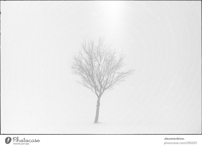 Nature Tree Life Death Fog Branch Uniqueness Twig Individual Insecure Vulnerable Grown