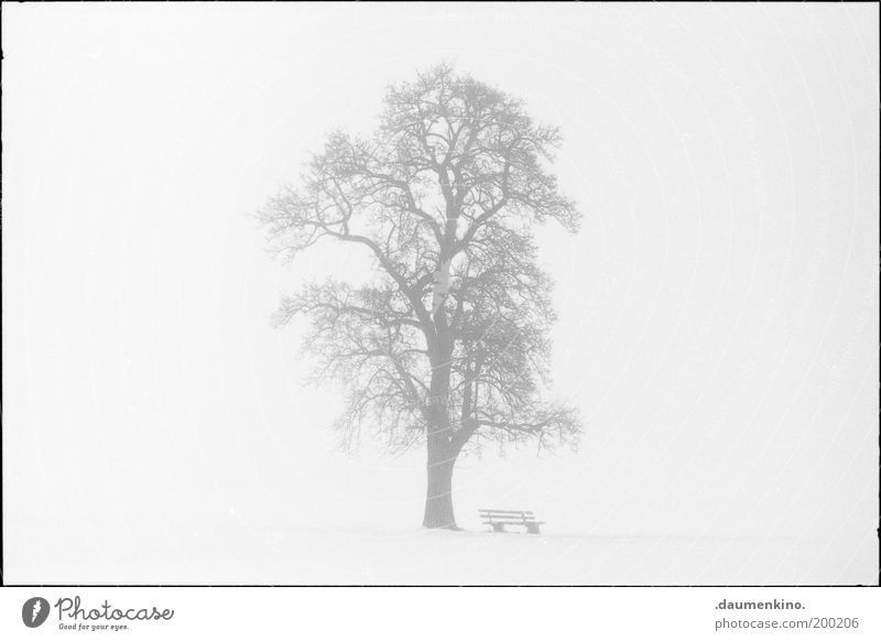 Nature Tree Life Wood Power Fog Might Bench Branch Uniqueness Strong Respect Twig Individual Self-confident Grown