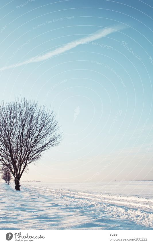 Sky Nature Blue White Tree Loneliness Winter Landscape Environment Cold Snow Lanes & trails Bright Air Horizon Moody