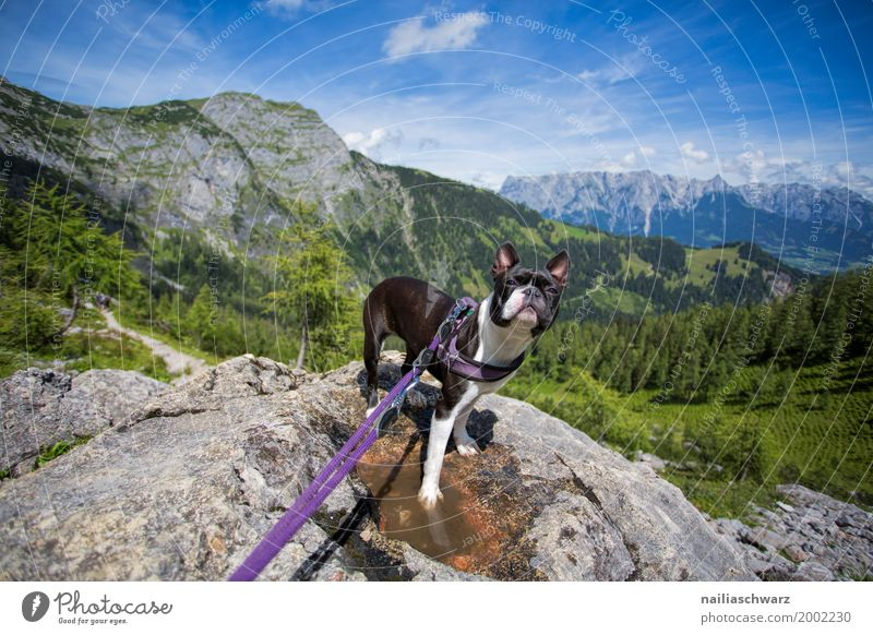 Nature Dog Vacation & Travel Summer Landscape Animal Joy Forest Mountain Environment Happy Rock Friendship Hiking Europe Happiness