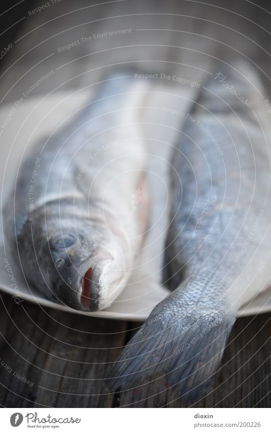 Blue Animal Death Nutrition Cold Food Gray Lie Fish Animal face Appetite Plate Organic produce Muzzle Trout BBQ season