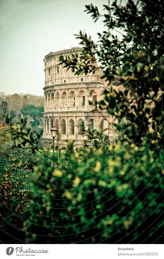 Green Tree Vacation & Travel Stone Facade Bushes Manmade structures Downtown Tourist Attraction Rome Italy City trip