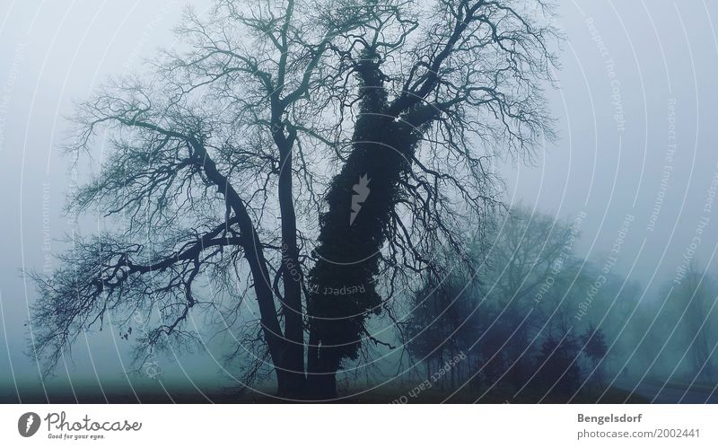 gloomy sunday Nature Landscape Weather Bad weather Storm Wind Fog Ice Frost Tree Park Hope Sadness Loneliness Fear Distress Sea of fog Patch of fog