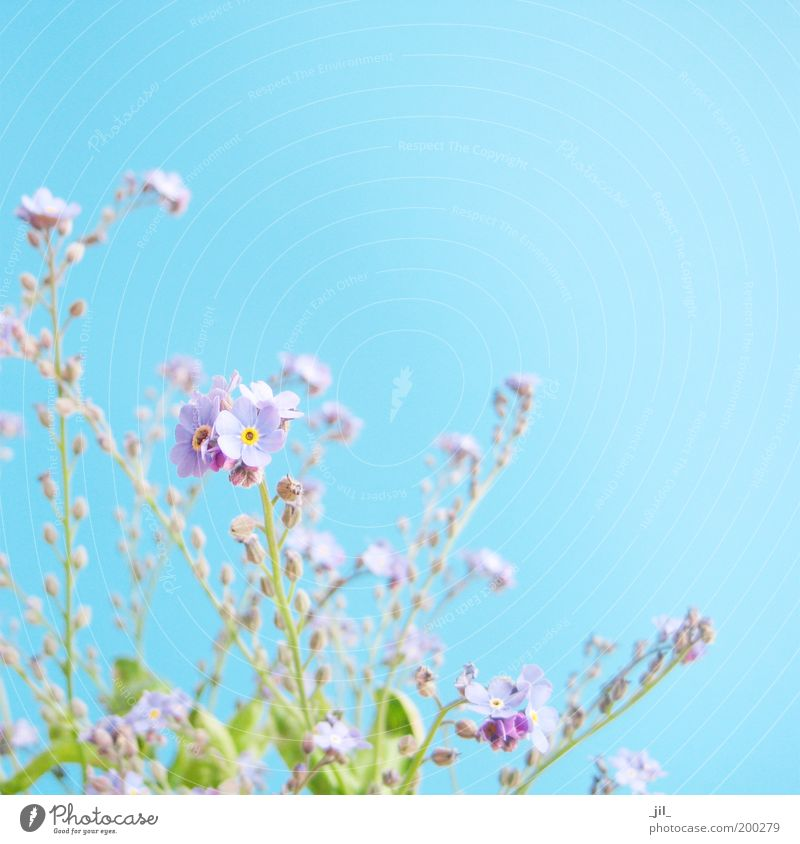 Beautiful Sky Flower Green Blue Plant Blossom Spring Dream Bright Small Fresh Esthetic Near Authentic Violet